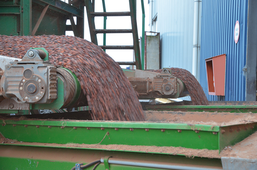 Spliethoff - Bulk cargo - cocoa beans on conveyor belt